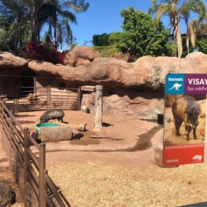 Natina Steel Staining Solutions at Phoenix Zoo